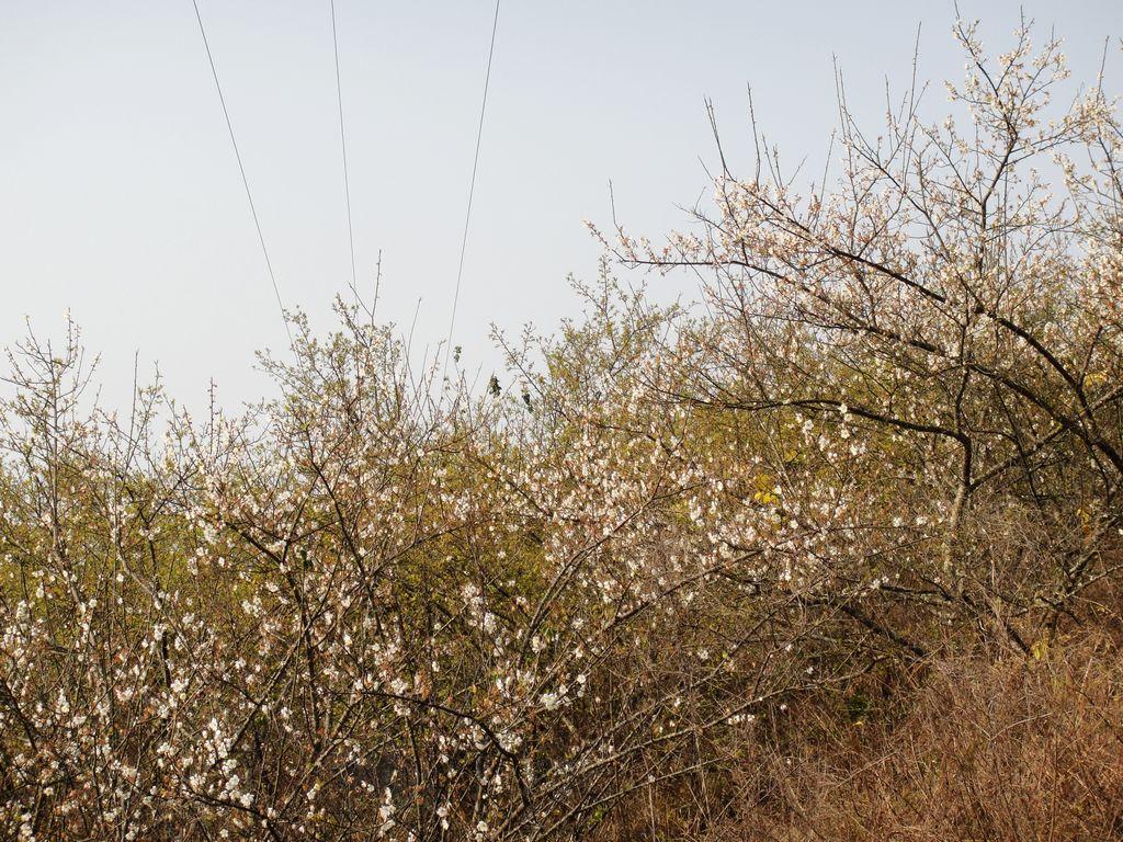 2010梅花